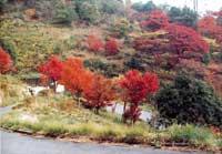 가을의 단풍 시즌의 모습