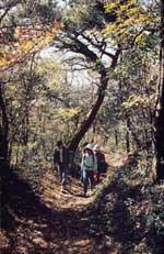 산책길에서의 오리엔티어링의 모습
