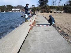 海岸堤防的調查