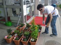 種植者分發