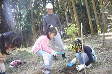 阔叶树的种植的样子