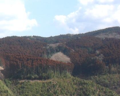 공유림화된 산록(사가시)