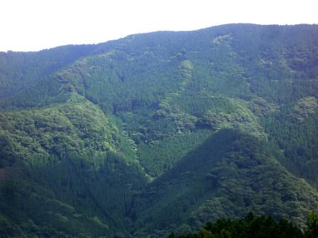 공유림화된 산록(다라초)