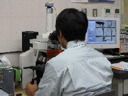 浮游生物検鏡作業