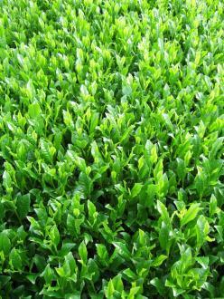 放的綠的芽的照片