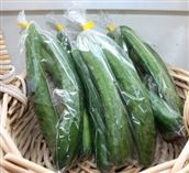 Photograph of cucumber