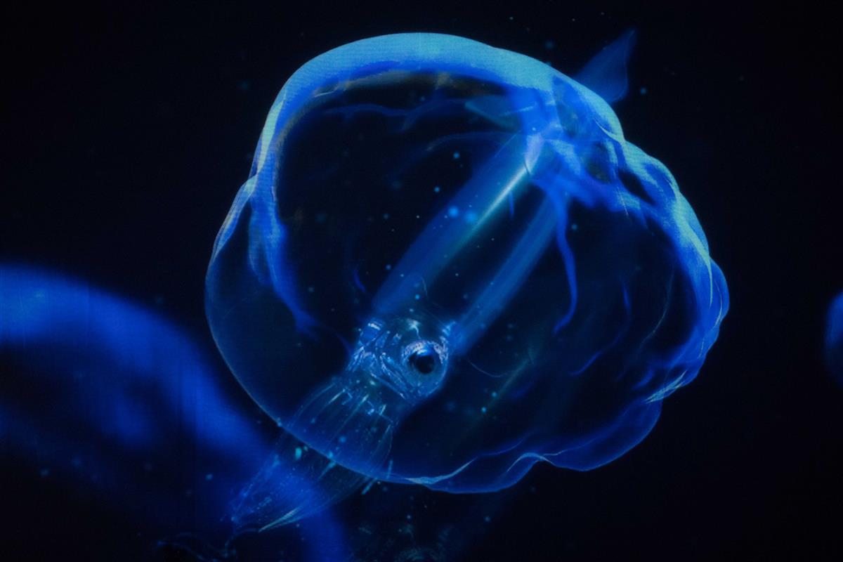 인스타 배급량으로 표현한 투명한 호각 오징어