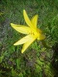 유우스게의 꽃