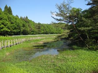 橡樹原濕原野