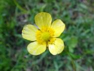 우마노아시가타의 꽃