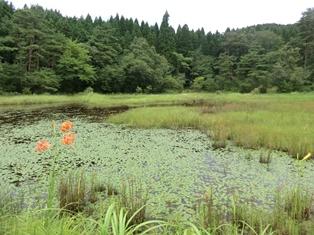 濕原野的風景