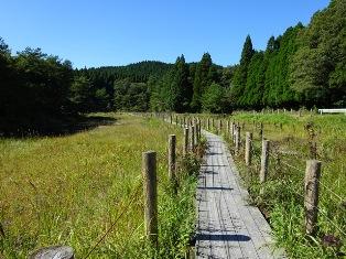橡樹原濕原野的風景